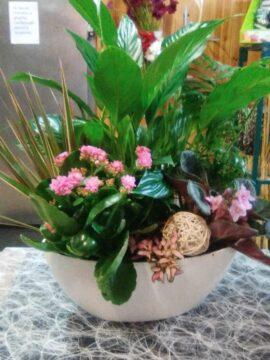 centro-plantas-variadas-45€